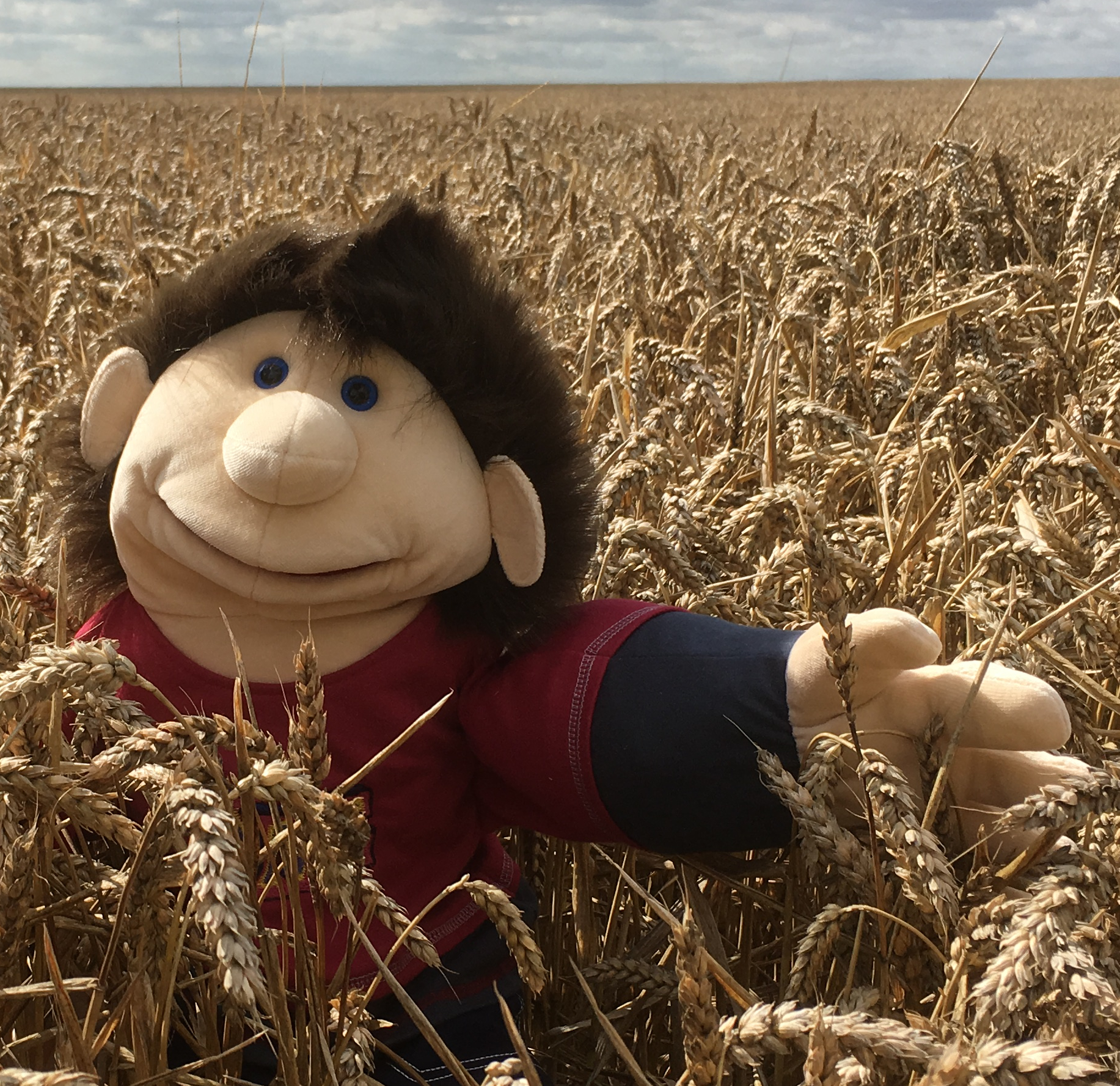 Pete in the wheat!